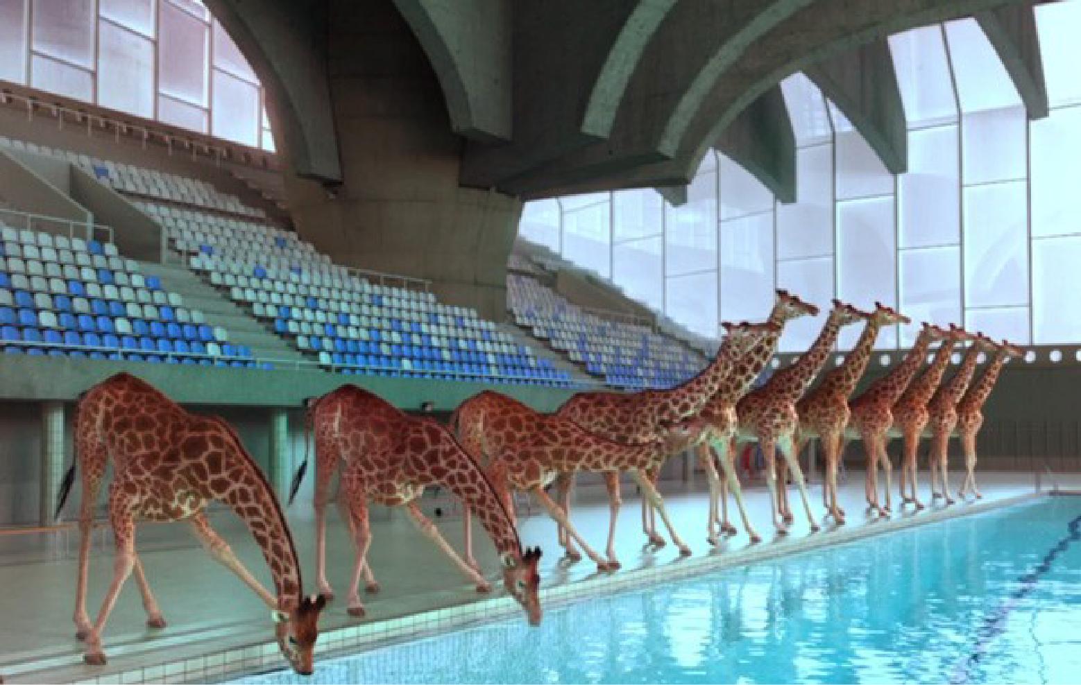 cgi-giraffen-600x377lkh-01