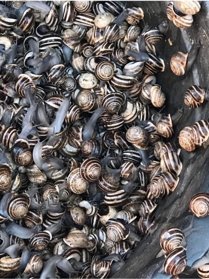Snails: streetfood in Marrakech